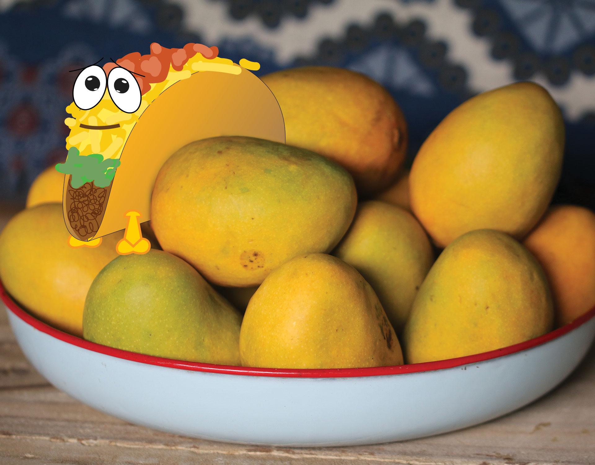 mango slipper